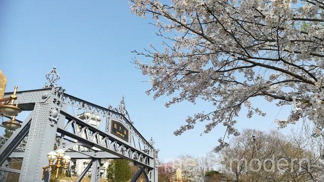 明治村 桜