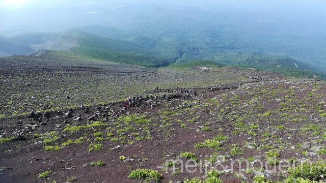 富士山 高山植物